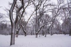 Winter park. Ulyanovsk royalty free stock image