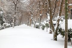 Winter and Park Stock Photo