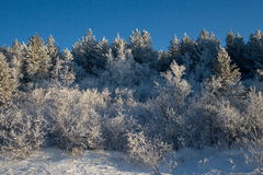 Winter on the pass. Winter forest on the mountain pass Stock Images