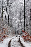 Winter path Stock Photography