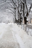 Winter path Stock Image