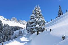 Winter_path fotografia de stock