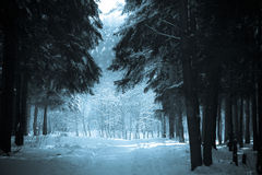 The winter path Stock Photography