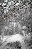 Winter path. With a natural tree arch royalty free stock images