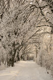 Winter path. A snowy path at winter time stock image