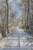 Winter path stock photo