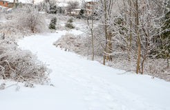 Winter Path Royalty Free Stock Photography