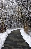 Winter Path Stock Images