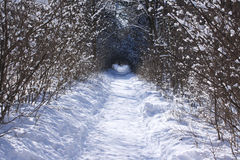 Winter path Royalty Free Stock Photos