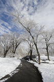 Winter path in Central Park. Pathway in Central Park, NYC at winter with snow and trees Stock Images