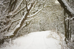 Winter path covered in snow Stock Photos