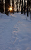 Winter Path At Dusk Royalty Free Stock Photo
