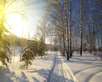 Winter Path in the forest Stock Photos