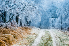 Winter path going through frozen forest Stock Image