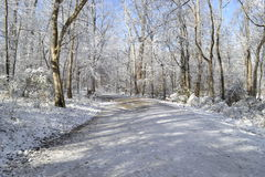 Winter path. Winter landscape with path through forest and trees covered with frost Royalty Free Stock Photo