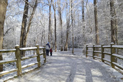Winter path. Winter landscape with path which goes through the forest covered in frost, wooden fence on the side of the road and walking people Stock Photo