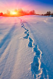 Winter path on meadow Royalty Free Stock Photo