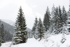 Winter path in mountains Royalty Free Stock Image