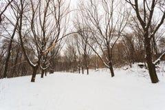 Winter path in park Stock Photos