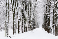Winter path in park Royalty Free Stock Images