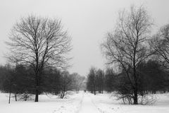 Winter path in the park among the trees. Winter path in the park among the trees Royalty Free Stock Image