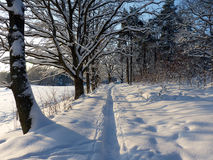 Winter path in the snow. Beautiful Winter Path a Sunny Day in Sweden Royalty Free Stock Image