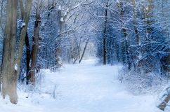 Winter Path. Snowed over hiking path on rural Illinois trek Royalty Free Stock Photo