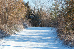 Winter path Royalty Free Stock Image