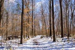 Winter Path Royalty Free Stock Photos
