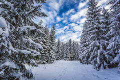 Winter path in snowy forest Stock Photo