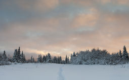 Winter Path at Sunset Stock Photography