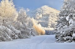 Winter path. Winter trail in slovakia mountains royalty free stock photography