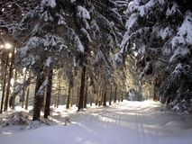 Winter path between trees Royalty Free Stock Photos