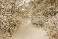 Winter Path. Through the trees in the middle of nowhere is so beautiful Royalty Free Stock Images