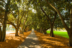tunnel path way in grove of trees Royalty Free Stock Image