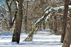 Winter path in the woods Royalty Free Stock Photos