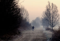 Winter Pathway royalty free stock images