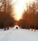 Winter pathway Royalty Free Stock Image