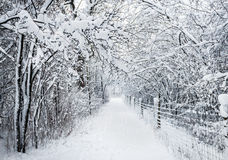 Winter Pathway in Snowstorm Stock Images