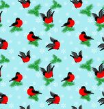 Winter pattern with bullfinches and fur-trees Stock Photography