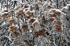 Winter pattern caused by cold wind Royalty Free Stock Photos