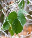 Winter patterns 1 Royalty Free Stock Image