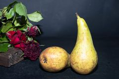 Winter pears brutally brown. Near dried maroon roses. stock image