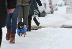 Winter. People and dog walk on a very snowy sidewalk. People step on an snow-stray pathway. Icy sidewalk. Ice on sidewalks. Winter. Ice. People and dog walk on a Stock Image