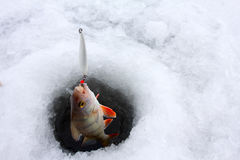 Winter perch fishing leisure Stock Photo