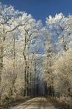 Winter-Pfad lizenzfreie stockfotografie