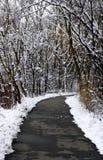 Winter-Pfad Stockbilder