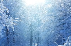 Winter photo landscape. With snow-covered trees in the park Royalty Free Stock Image