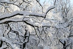 Winter photo landscape. With snow-covered trees in the park Stock Image