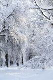 Winter photo landscape. With snow-covered trees in the park Stock Photos